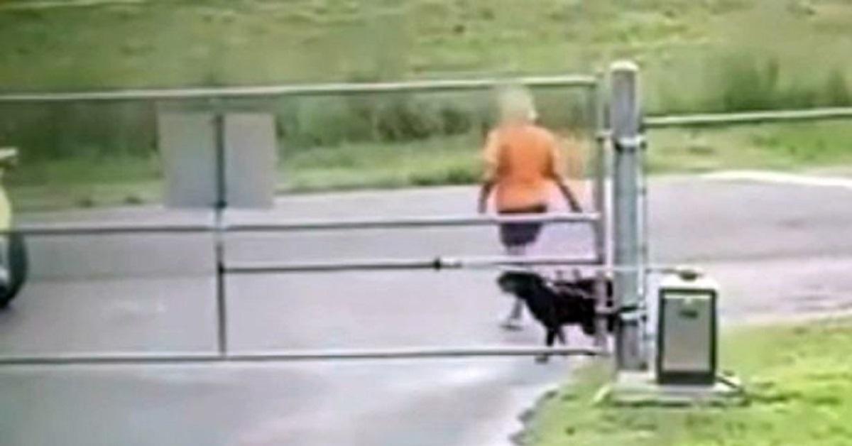 Cane abbandonato cerca di seguire la sua padrona