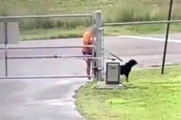cane legato e abbandonato