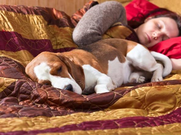 le-donne-preferiscono-dormire-con-il-loro-cane 3