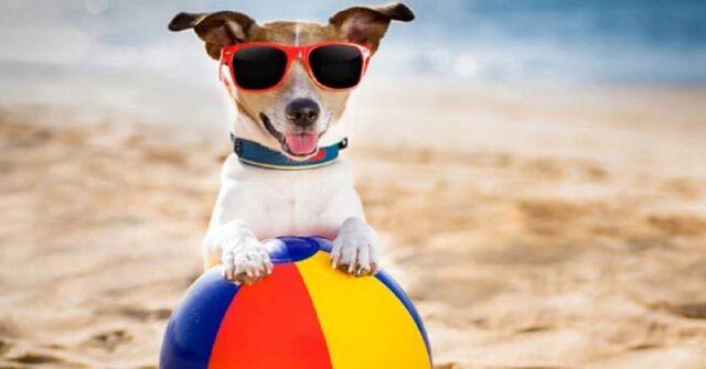 cani-spiaggia-libero-accesso-dal-tar