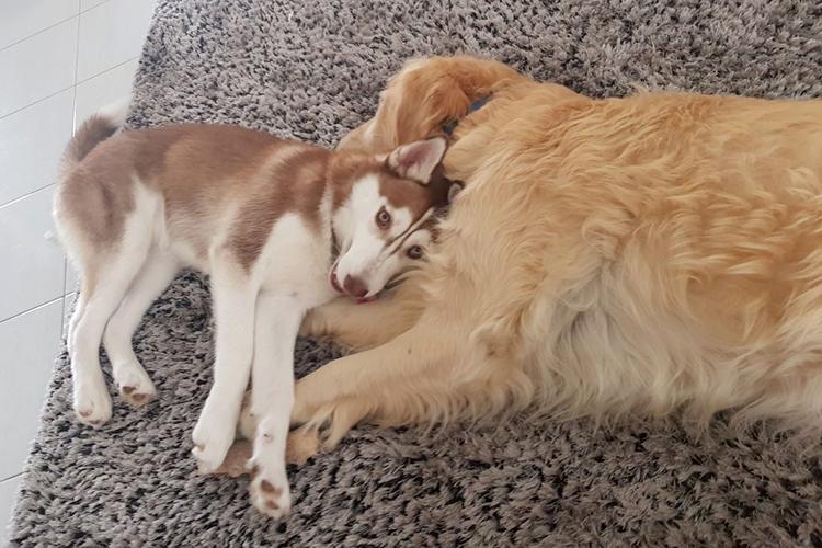 Risultati immagini per due cani in casa