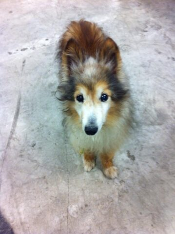 La-storia-di-Cody-e-di-quel-cane-che-gli-ha-cambiato-la-vita
