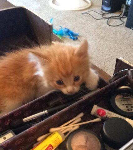 il-gattino-che-cercava-disperatamente-una-famiglia 2