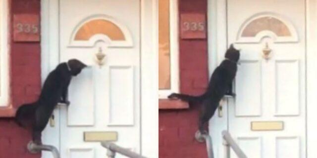 gatto-alla-porta