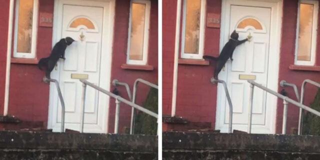 gatto-bussa-porta