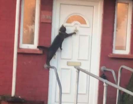gatto che bussa alla porta