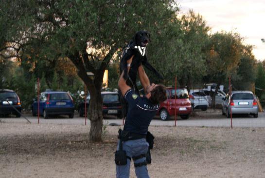 gino-labrador-nero
