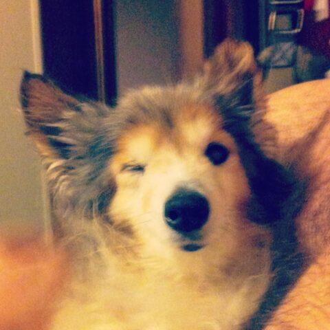 La-storia-di-Cody-e-di-quel-cane-che-gli-ha-cambiato-la-vita 4