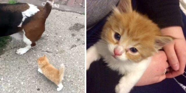 il-gattino-che-cercava-disperatamente-una-famiglia