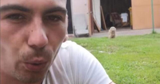 il-video-di-uno-strano-animale-domestico