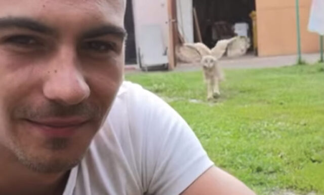 il-video-di-uno-strano-animale-domestico 1