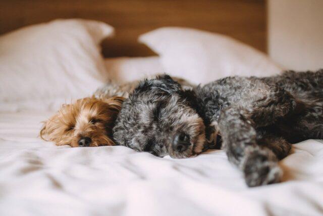 le-donne-preferiscono-dormire-con-il-loro-cane 1