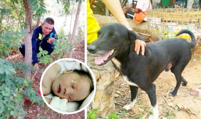 Ping-Pong-il-cane-che-ha-salvato-la-vita-di-un-neonato 1