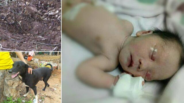 Ping-Pong-il-cane-che-ha-salvato-la-vita-di-un-neonato 2