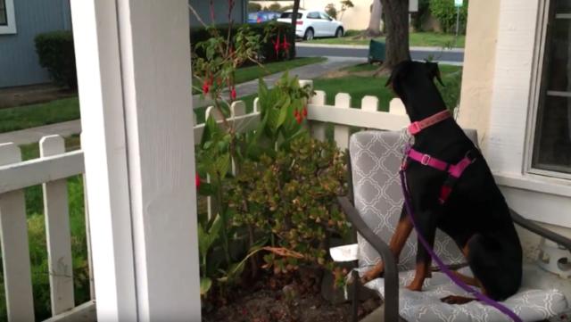 la-cucciola-eccitata-quando-vede-il-suo-amico-umano