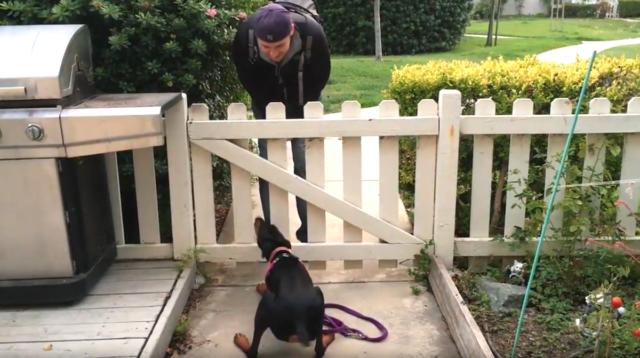 la-cucciola-eccitata-quando-vede-il-suo-amico-umano 1