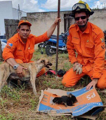 cagnolina-chiede-aiuto-agli-umani-per-salvare-i-suoi-cuccioli 1