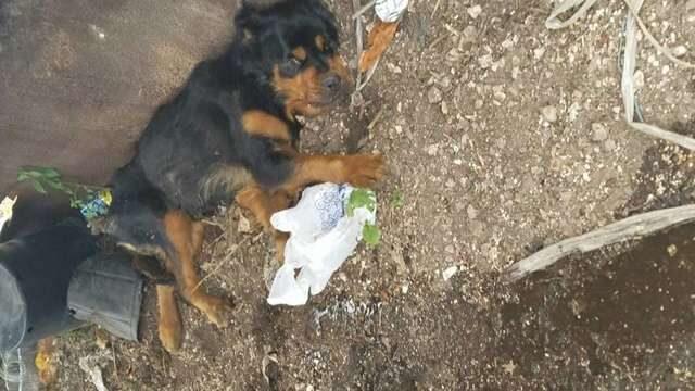 la-cagnolina-trovata-abbandonata-nella-discarica