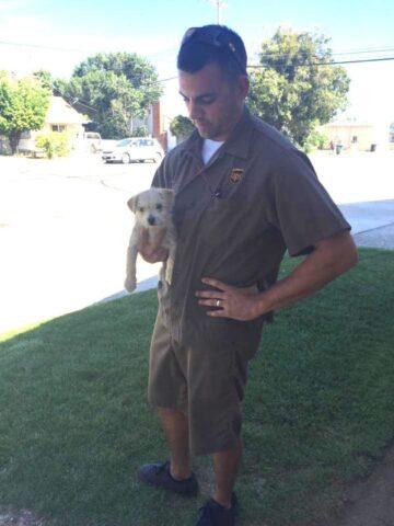corriere-salva-la-vita-del-cucciolo-abbandonato 1