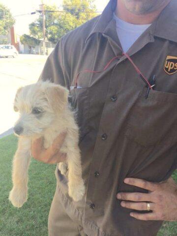 corriere-salva-la-vita-del-cucciolo-abbandonato 3