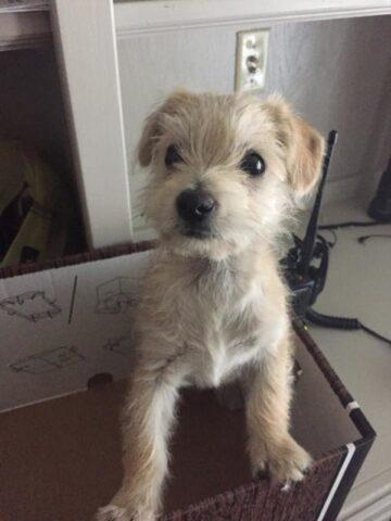 corriere-salva-la-vita-del-cucciolo-abbandonato 4