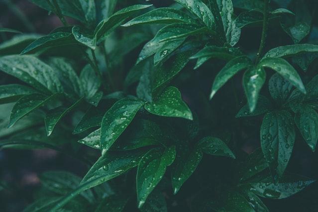 verde-bosco