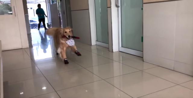 il-cane-che-ama-andare-dal-veterinario