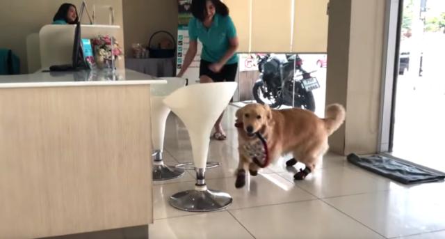 il-cane-che-ama-andare-dal-veterinario 1