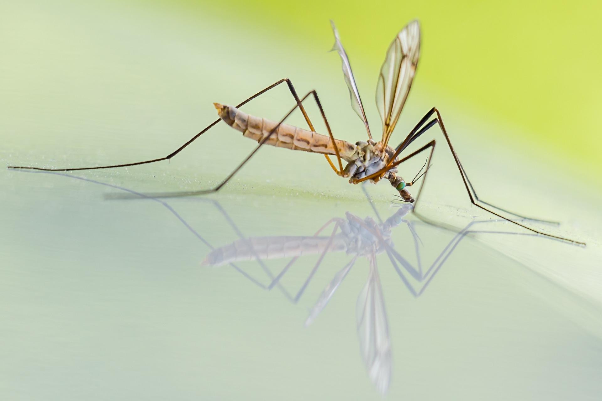 Come eliminare le zanzare in casa