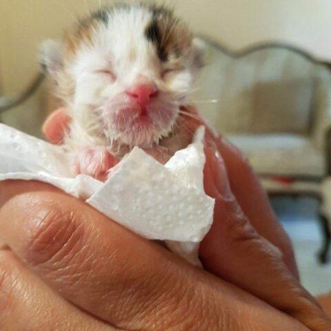 il-gattino-trovato-nella-discarica