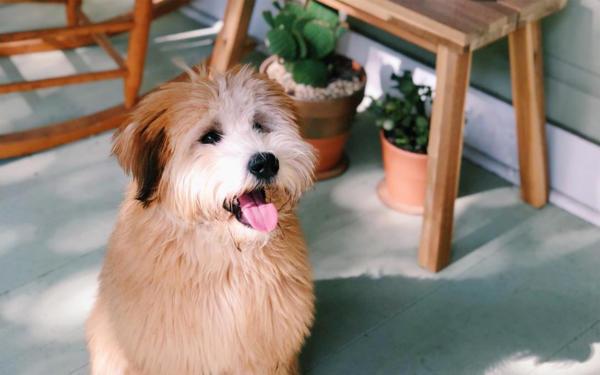 la-triste-esperienza-di-Sara-e-Nick-sul-loro-cane-Winnie