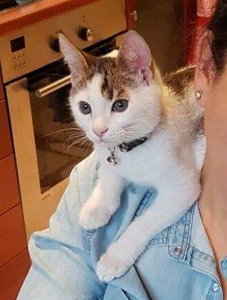 il-gattino-trovato-nella-discarica 3