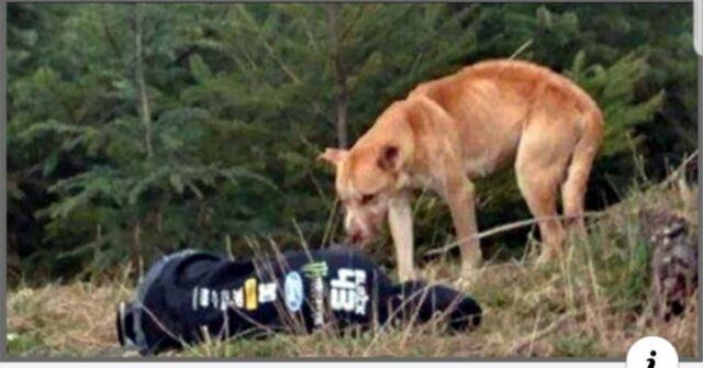 Bear-il-cucciolo-che-viveva-su-una-montagna-solo-ed-impaurito