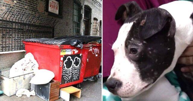 il-cucciolo-usato-come-esce-è-stato-abbandonato-vicino-un-secchio-della-spazzatura
