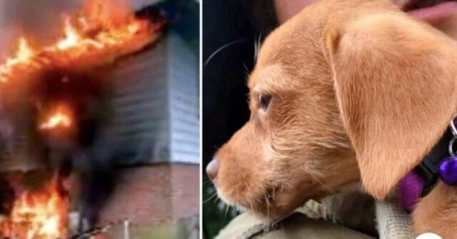 Durante-l'incendio-nell'abitazione-la-piccola-Yoda-è-rimasta-intrappolata-dentro-ma-alla-fine...