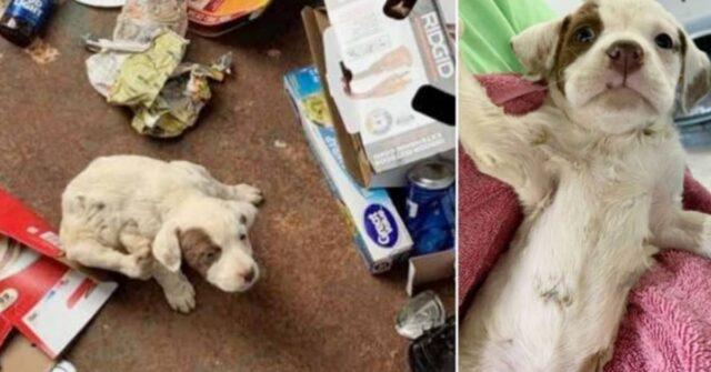il-cucciolo-abbandonato-nel-secchio-della-spazzatura-spera-di-trovare-presto-una-famiglia-amorevole