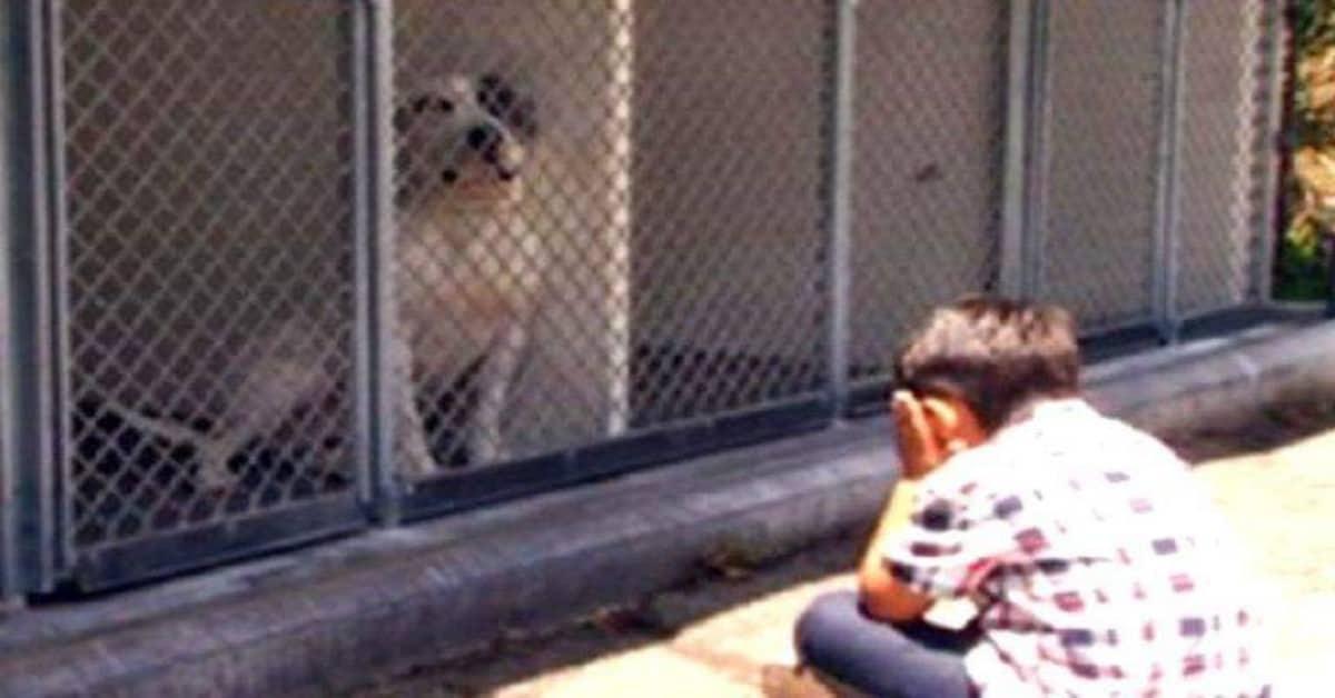 il-progetto-di-Jacob-per-i-cani-del-rifugio