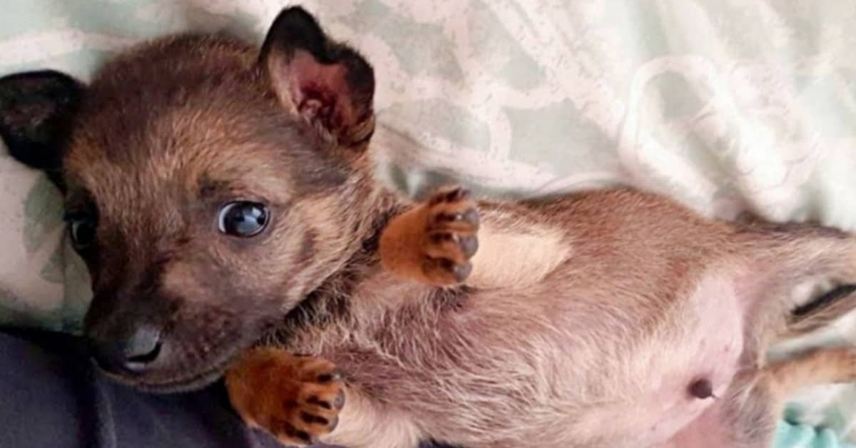 Murphy-il-cucciolo-maltrattao-per-divertimento-da-alcuni-bambini-cerca-una-casa