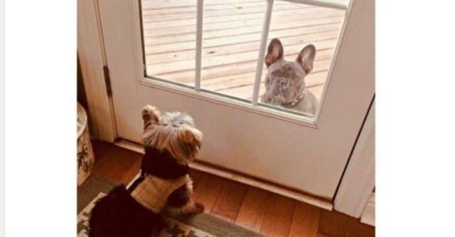 l'amicizia-speciale-tra-Cooper-e-Rhino 3