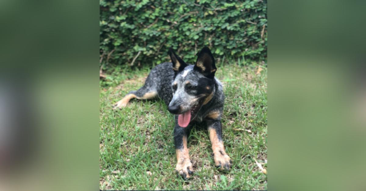 Nya-la-cucciola-sottoposta-ad-eutanasia-senza-un-reale-motivo