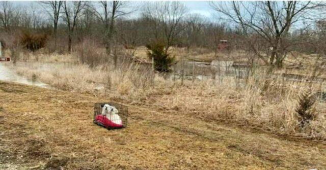 i-cagnolini-abbandonati-vicino-al-lago-che-ora-sono-vivi-per-miracolo