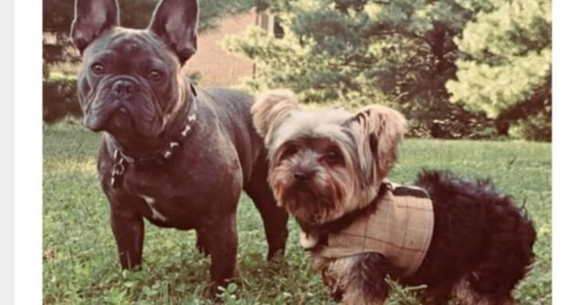 l'amicizia-speciale-tra-Cooper-e-Rhino 2
