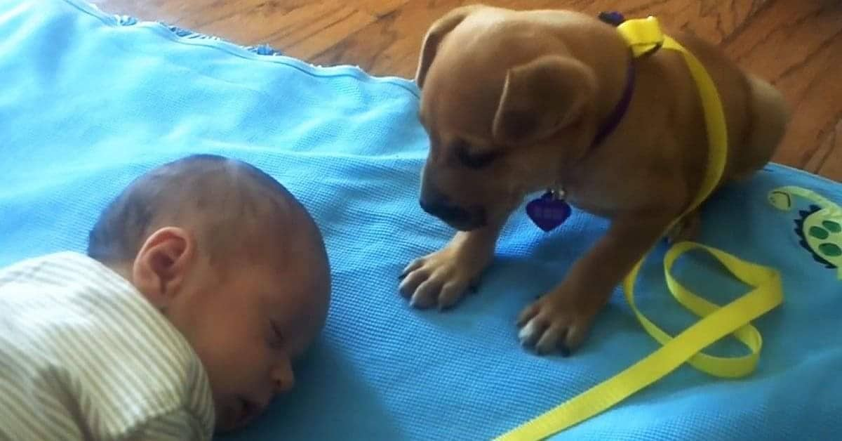 La dolcezza di Callie, con il neonato