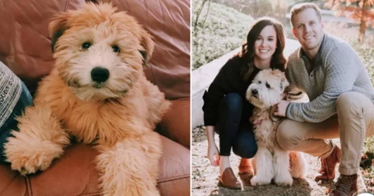 La-triste-storia-di-Nick-e-Sara-sul-loro-cane-Winnie