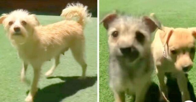 La-cagnolina-che-per-far-mangiare-i-suoi-cuccioli-ha-rubato-del-cibo