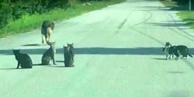 Donna-abbandonata-i-suoi-11-animali-domestici 1