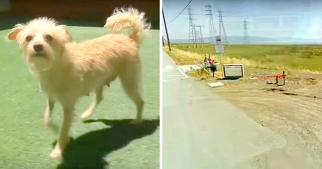 il-cane-salvato-insieme-ai-suoi-cuccioli