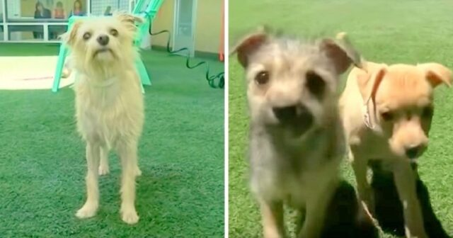 il-cane-salvato-insieme-ai-suoi-cuccioli 2