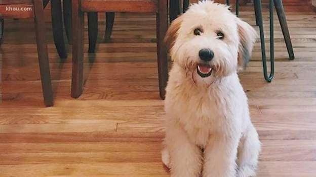 la-triste-esperienza-di-Sara-e-Nick-sul-loro-cane-Winnie 3