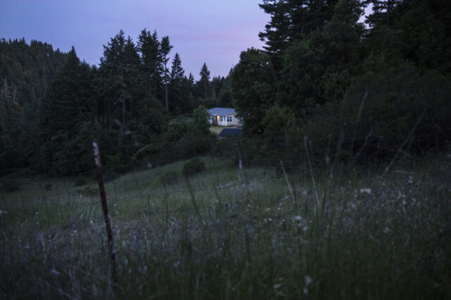 scoperta-neonata-abbandonata-in-mezzo-al-bosco 2